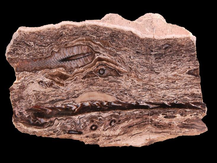 expozice-geologickeho-vyvoje-1724